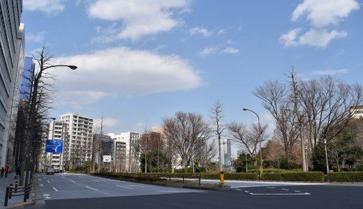外濠の桜(の下見)