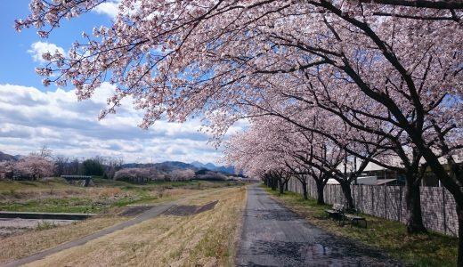 埼玉工場横の児玉千本桜