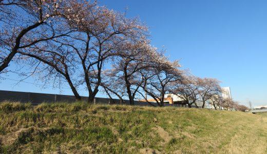 令和2年のこだま千本桜